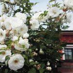 Restyling giardino formale